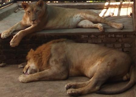 Salah Satu Koleksi Taman Satwa Cikembulan Kadungora, Garut.