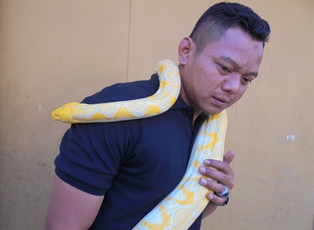 Komunitas Reptil.
