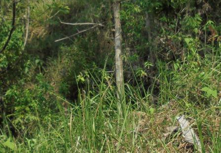 Gua Alam Dibawah Tebing Kars Situs Batu Lulumpang.