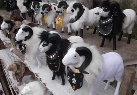 Miniatur Domba Garut.