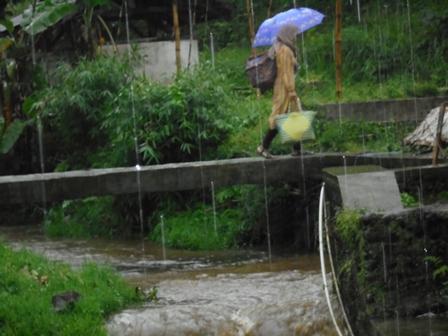 Nyaris Setiap Hari Diguyur Hujan.