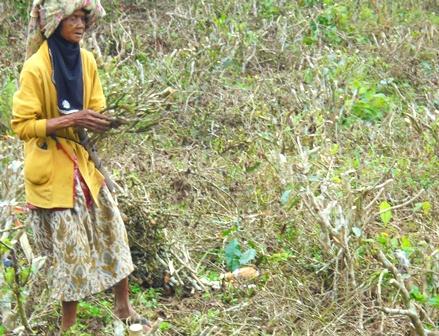 Ibu Tua-renta Pencari Kayu Bakar.