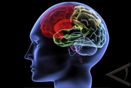 Otak manusia. (Antara).