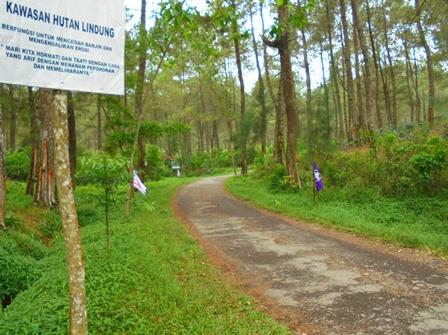 Lintasan Hutan Situ Cibeureum.